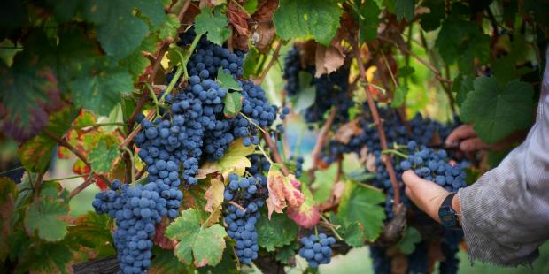 Global Wines fecha parceria com quinta do Dão