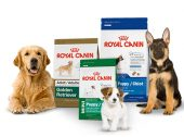Royal Canin Iberia tem nova directora de Corporate Affairs