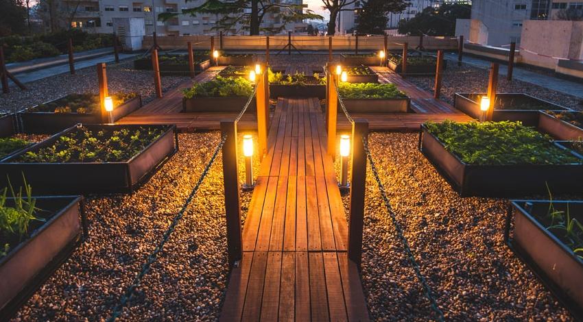 Noocity: a empresa que plantou a horta bio da UNESCO